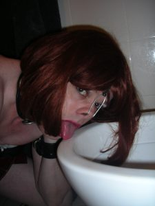 Brittany Toilet Pig